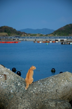 Cat at fishing harbor.jpg
