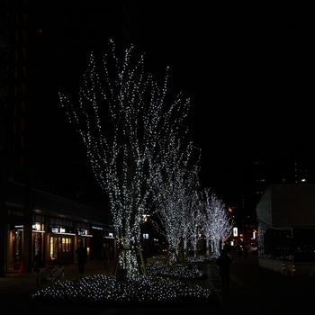 winter_illumination_of_roadside_trees.jpg